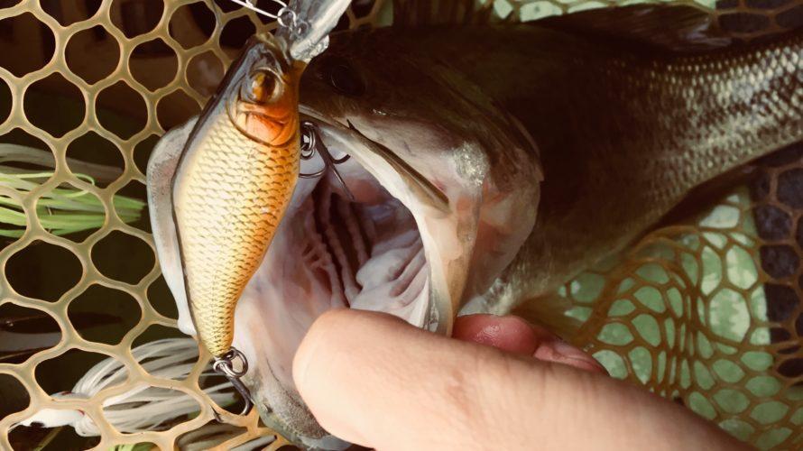 【釣行】2017年9-11月釣果まとめ