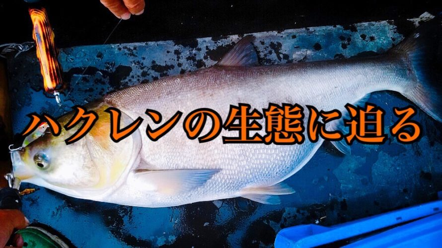 【コラム】利根川に集結するハクレン、その理由は?