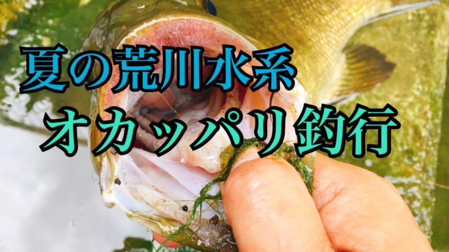 【釣行】2018年8月 荒川水系おかっぱり-スモちゃんに癒してもらう-