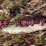 【釣行】3/3おかっぱり釣果-春モード突入-