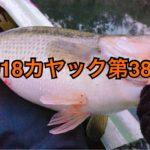 【釣行】カヤック第38戦-水温12℃、アベンタで水面炸裂☆-